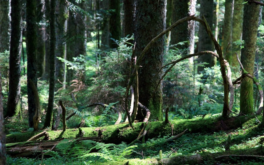 Wunderwelt Wald, Teil 1