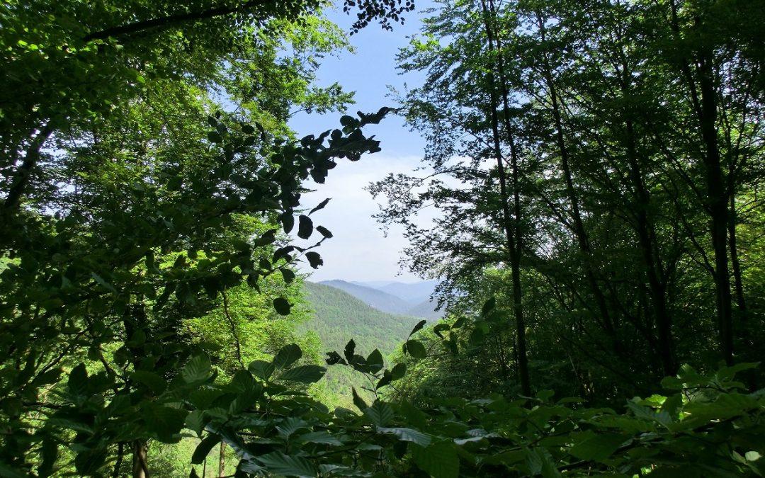 Wunderwelt Wald, eine zauberhafte Begegnung mit Mutter Natur, Teil 2