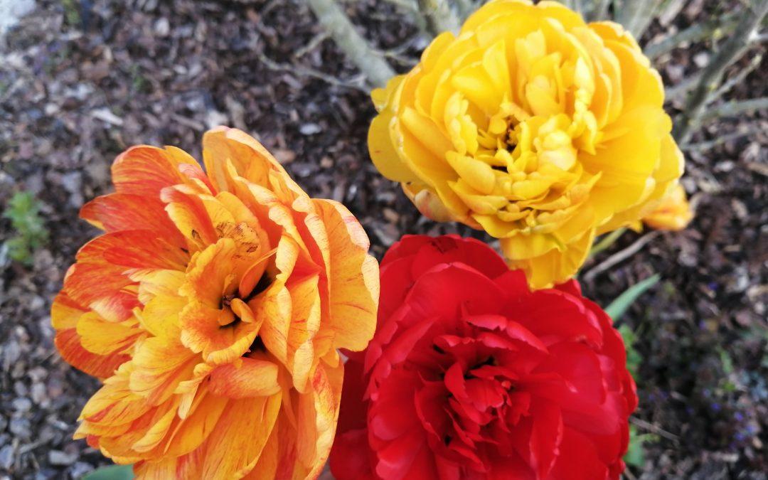 Gartenglück – ein wundervolles Stück vom Glück
